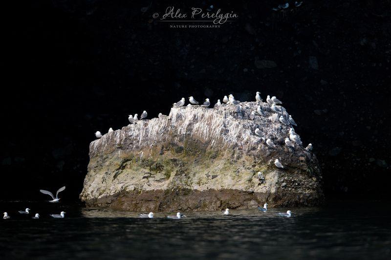 Чаячий островокphoto preview