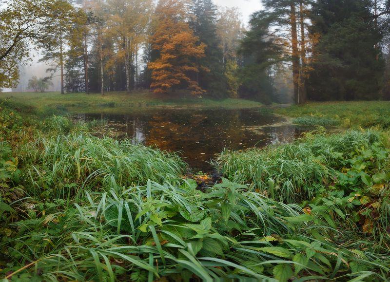 питер, павловск, павловскийпарк, осень, пейзаж Из осени. . .photo preview