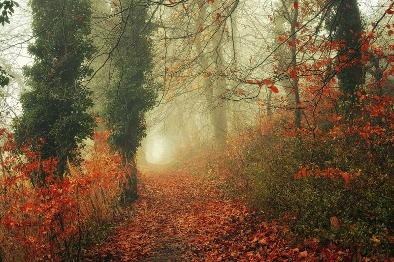 осенняя тропа autumn path misty fall trees magic mist foggy road dranikowski leaves осенняя тропаphoto preview
