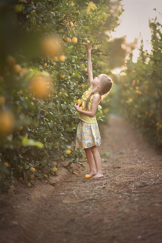 лимоны, лето, золотой час, красота, закат, природа, деревья, лучи, свет, детство, дети, люди Лимоновый закатphoto preview
