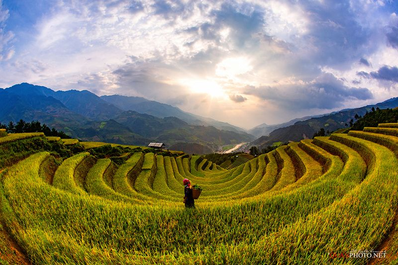 quanphoto, landscape, sunset, sundown, dust, rays, valley, rice, terraces, mountains, rural, farmland, agriculture, vietnam Rice Terraces Sunsetphoto preview