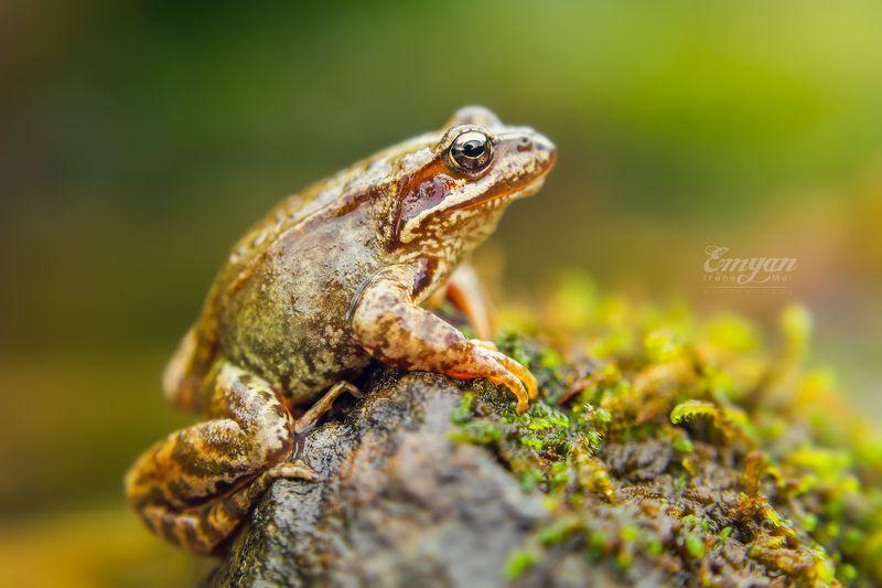 карпаты, животные, лягушка, макро, природа, nature, carpathians, mountains, frog, animals Царевна, просто Царевнаphoto preview