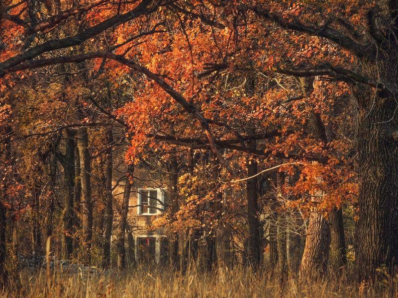 Осень стучится в окнаphoto preview