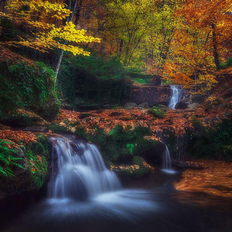 Autumn фото превью