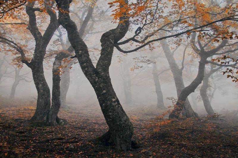 Осенний танецphoto preview