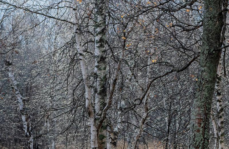 осень, лесная река, непогода, бриллиантовый, дождь, мещёра, рязанская область Pro бриллиантовые этюды поздней осениphoto preview