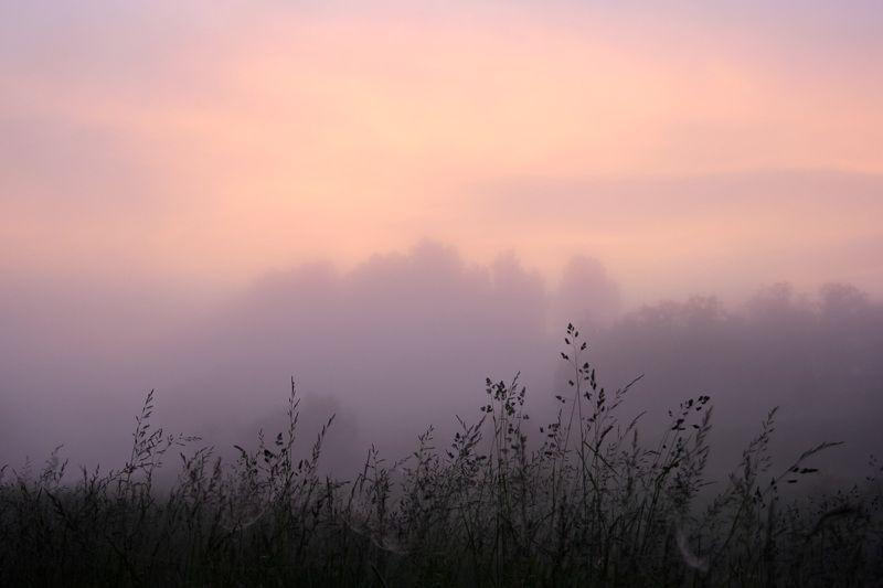 утро, туман, рассвет, трава, небо Раннее утро у села Холохоленка Тверской областиphoto preview