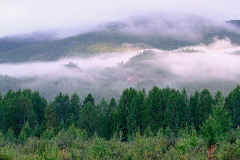 Туман над тайгойphoto preview