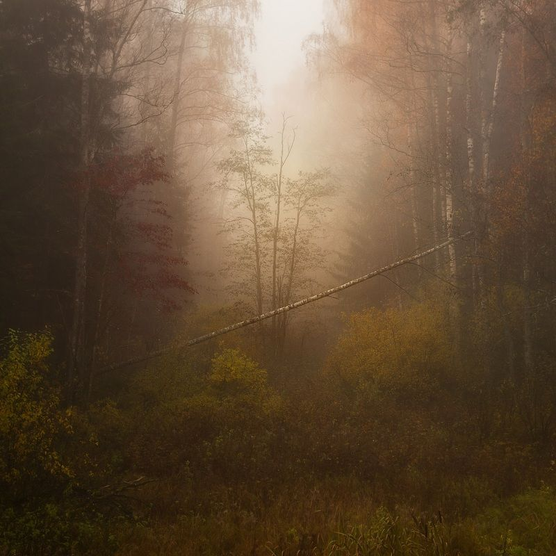 лес, осень, туман Осенний лесphoto preview