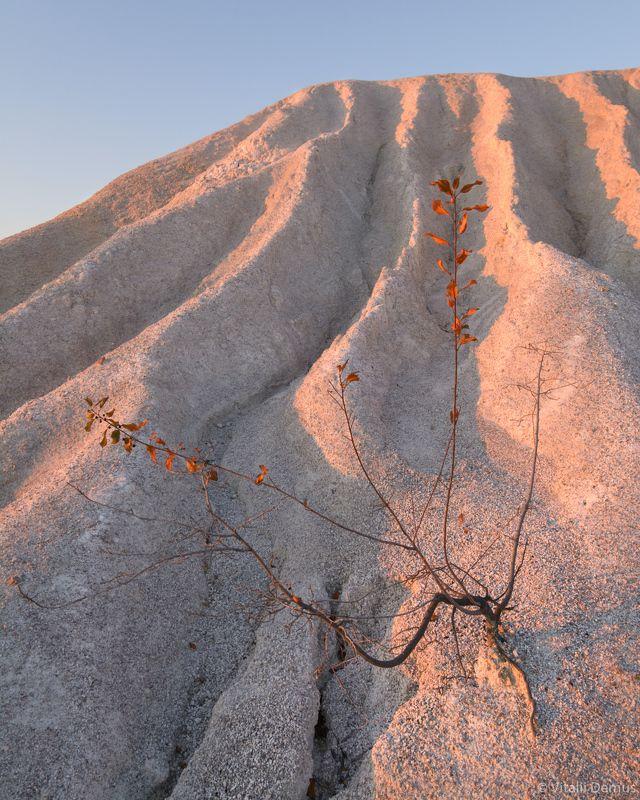 осень, желтый, рассвет,  утро, природа, свет, солнечный свет, лучи солнца, куст, засуха О желании жить. Окрестности Актовского каньона.photo preview