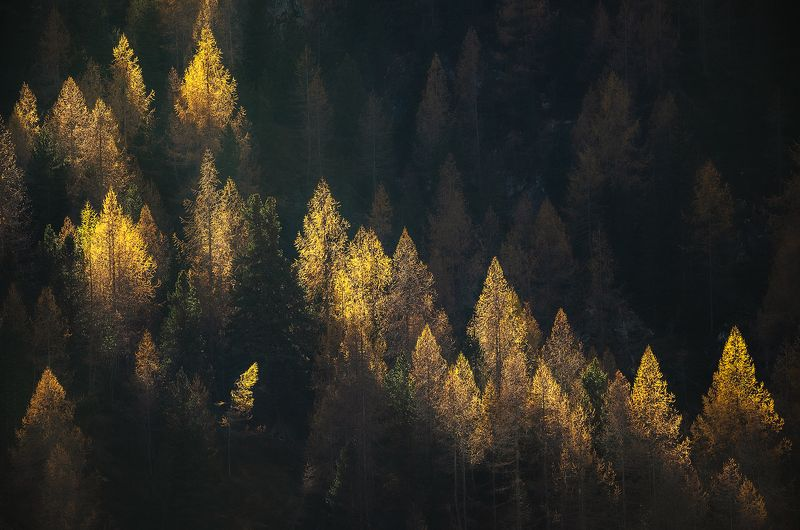 Magical lanterns of the forest фото превью