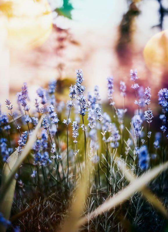 antrisolja,nature,macro О разноцветном ностроенииphoto preview