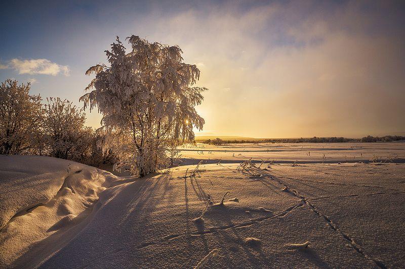 снег следы мороз Следы на снегуphoto preview