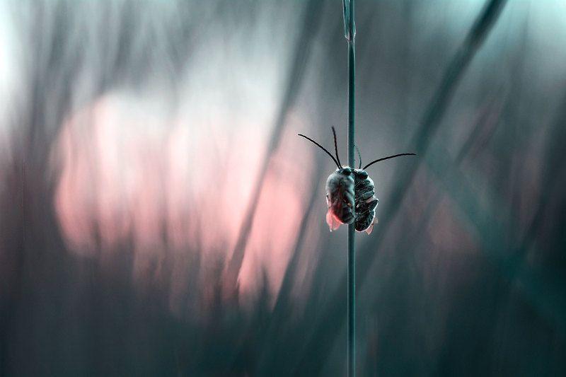 макро, вечер, свидание на закате закат, пчелы photo preview