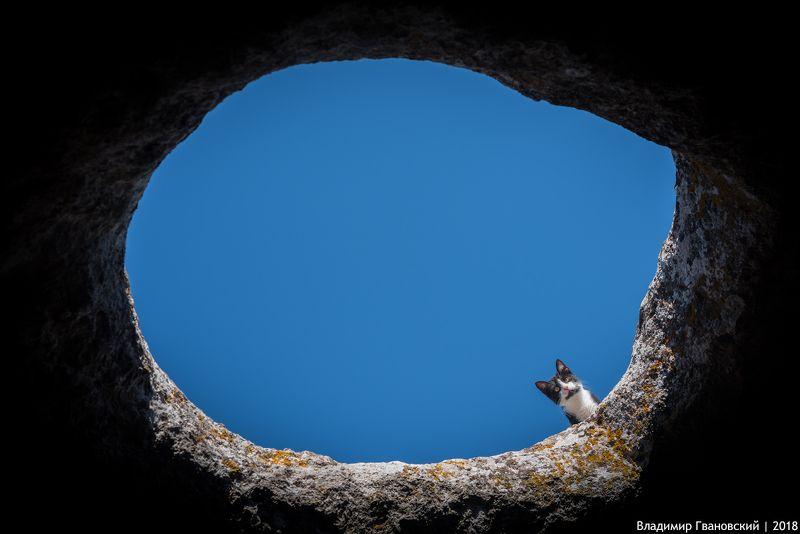 Котик с Эски-Керменphoto preview