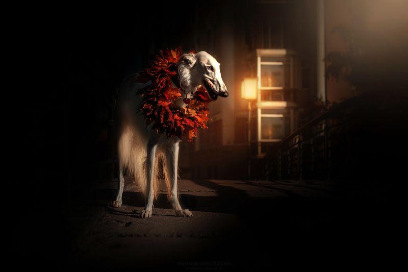 собака, анималистика, осень Ночь, улица, фонарьphoto preview