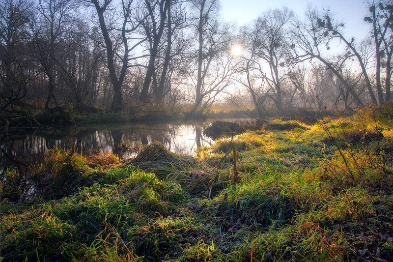 пейзаж, осень, река, лес, landscape, autumn, river, forest,  Утро на берегу рекиphoto preview