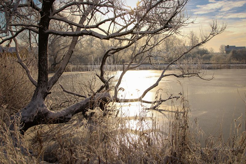 природа, озеро, дерево, лед, зима Декабрьphoto preview