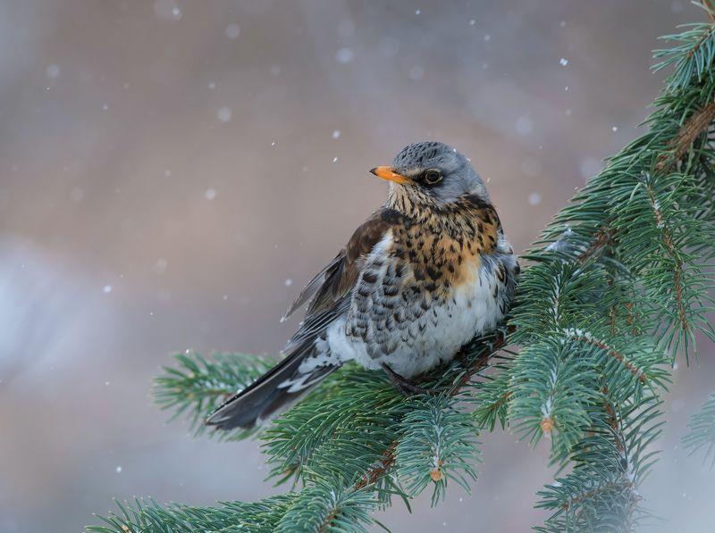 птицы,природа,зима, Некуда спешить.photo preview
