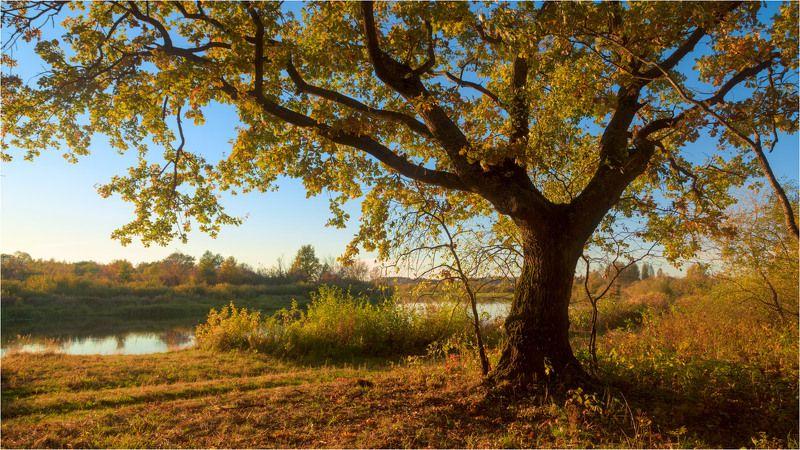 осень, дуб В золотомphoto preview