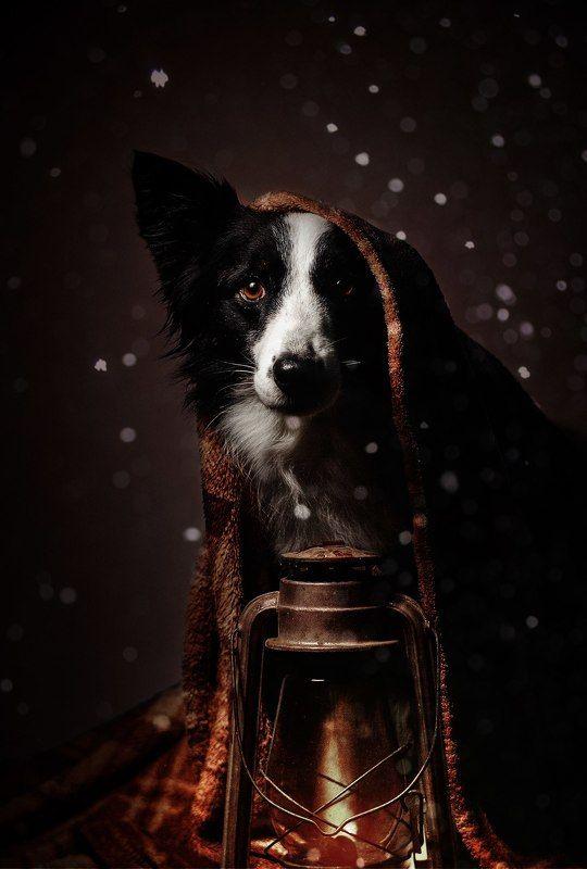 собака, анималистика, зима Праздник к нам приходитphoto preview