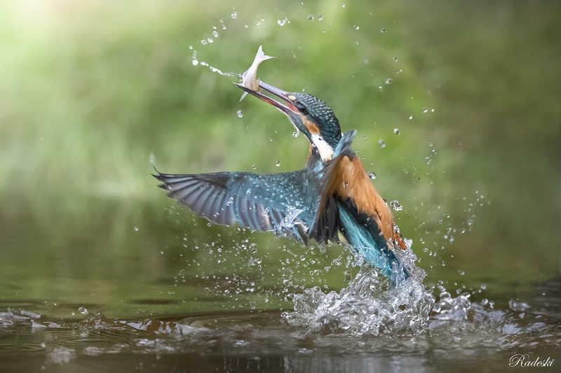 La pesca del Martino photo preview