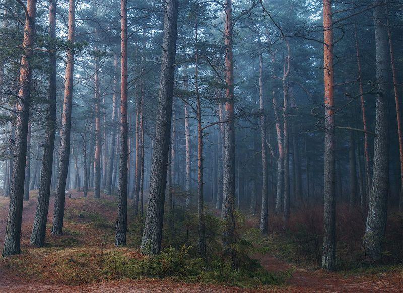 лес, атмосфера, пейзаж, туман В тёмно-синем лесуphoto preview