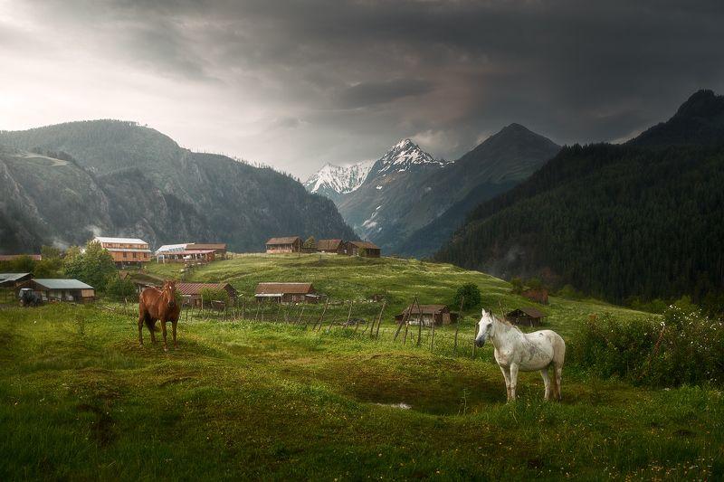 georgia, tuhetu, грузия, тушетия, лошади, Вечер в деревушке Омало.photo preview