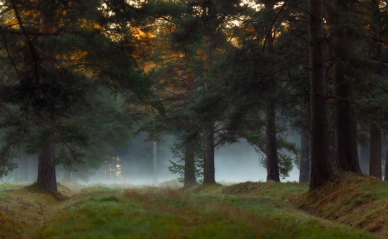павловск, павловскийпарк, питер, рассвет, туман, питер, осень Утром . . .photo preview