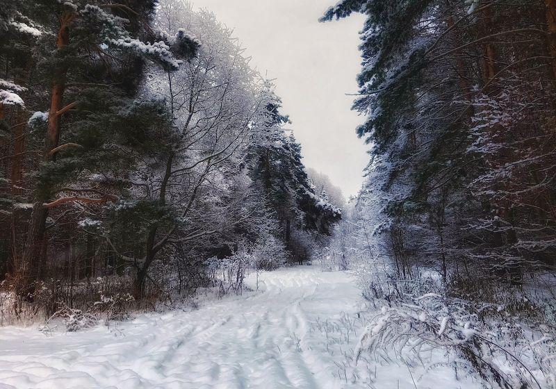лес, зима, пейзаж, россия Зимний лесphoto preview
