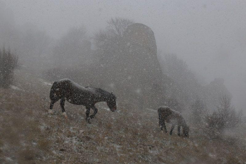 Снегопад на Демерджиphoto preview