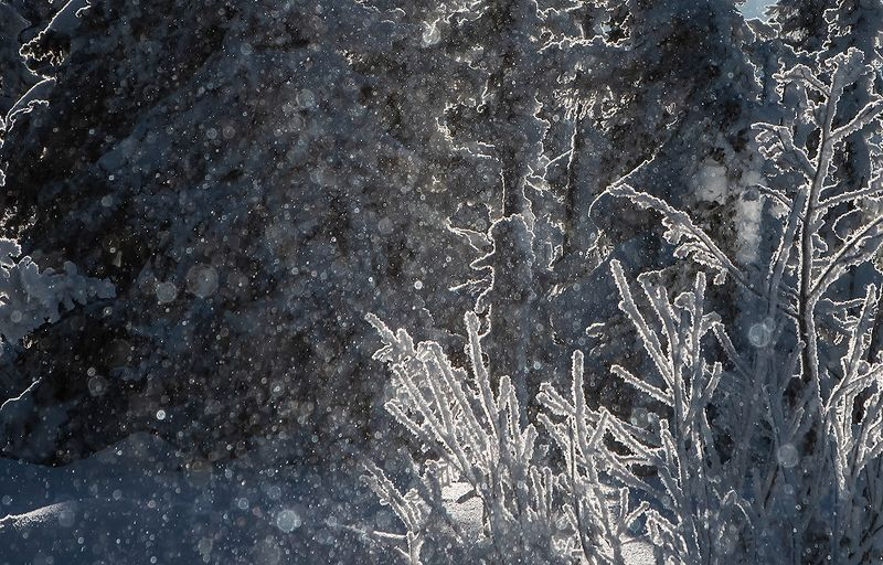 снег, иней, мороз, солнце, зима, пихты, гора зелёная, шерегеш, горная шория, сибирь Здравствуй, Шерегеш! ... )photo preview
