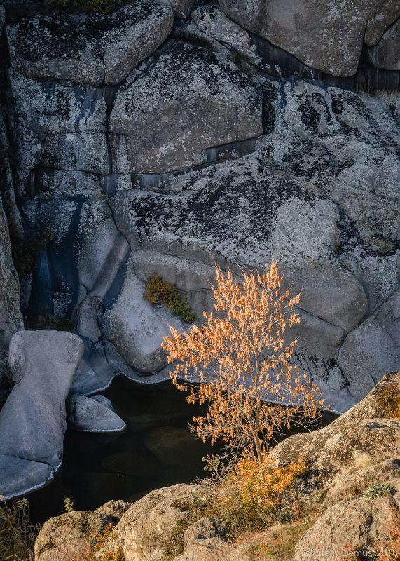 осень, желтый, закат,вечер, природа, свет, солнечный свет, лучи солнца, дерево Дерево в каньоне. Актовский каньон.photo preview