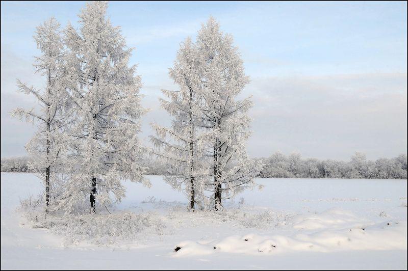 зима,снег,деревья Зимний нарядphoto preview