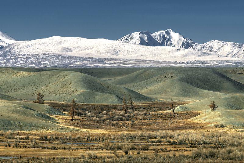 северо-чуйский,  горный алтай, курай В Курайской степи...photo preview