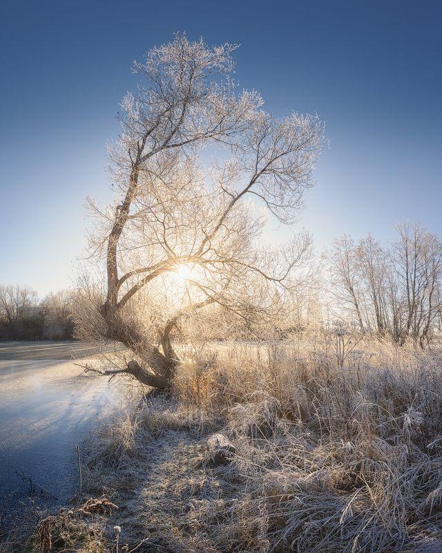изморозь,ноябрь,дерево Серебро ноябряphoto preview