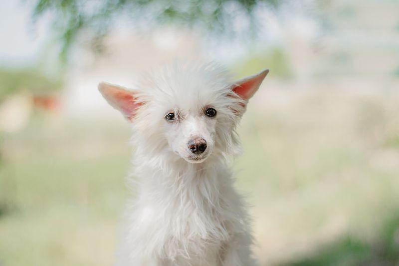 собака, щенок, анималистика, домашние животные, лето, портрет Нежностьphoto preview