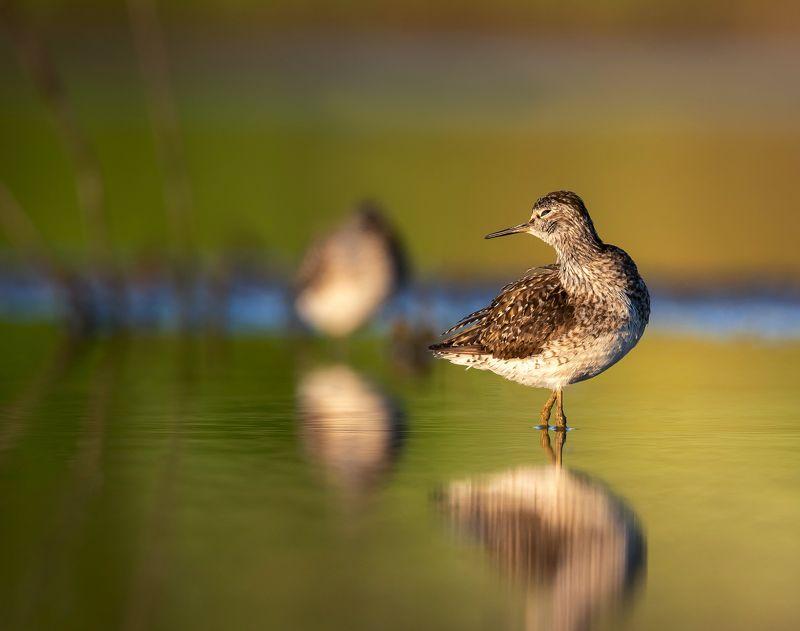 птицы,природа,лето Что, уже утро?photo preview