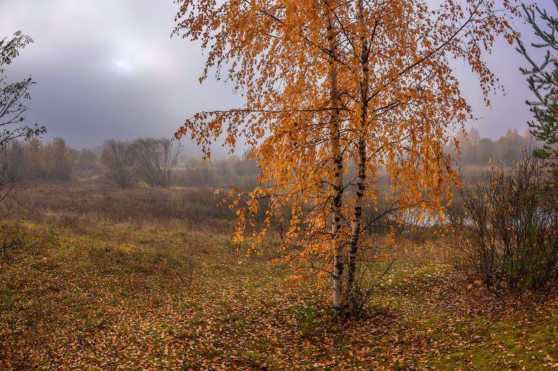 осень туман октябрь утро в золотеphoto preview