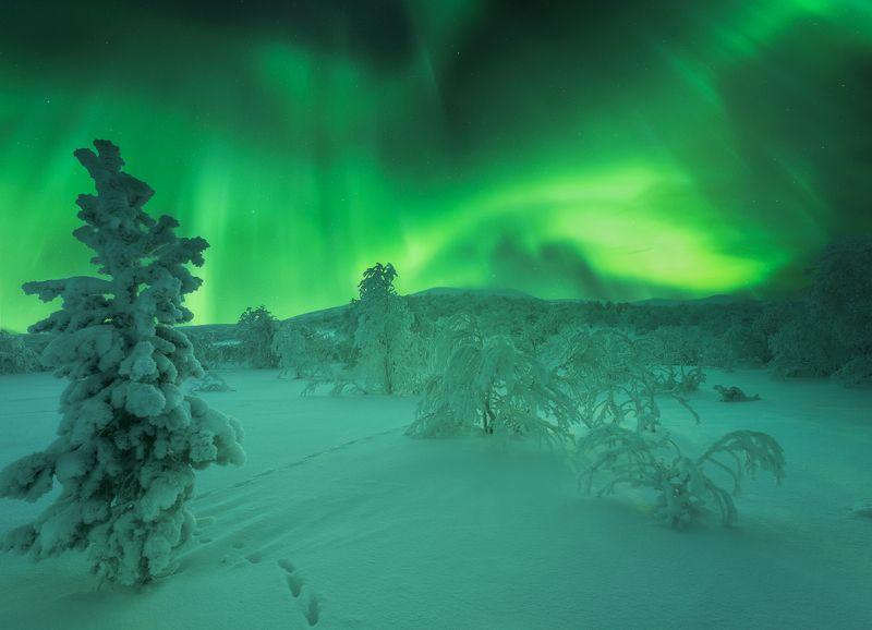 кольский полуостров, aurora borealis, северное  сияние Тропинкаphoto preview