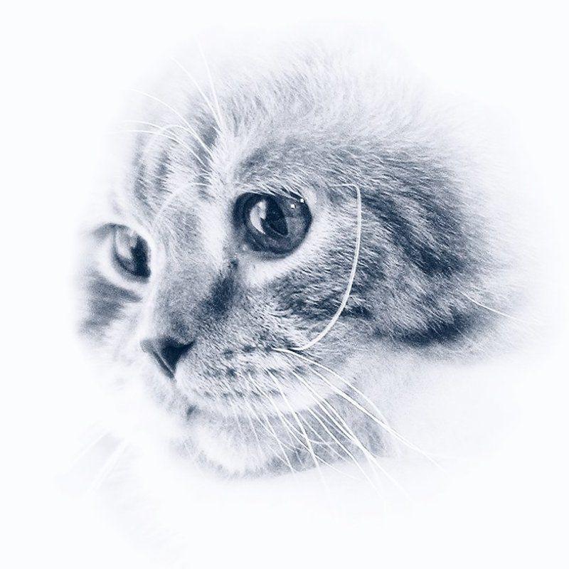 кот, кошка То ли Морды, то ли Лица...photo preview