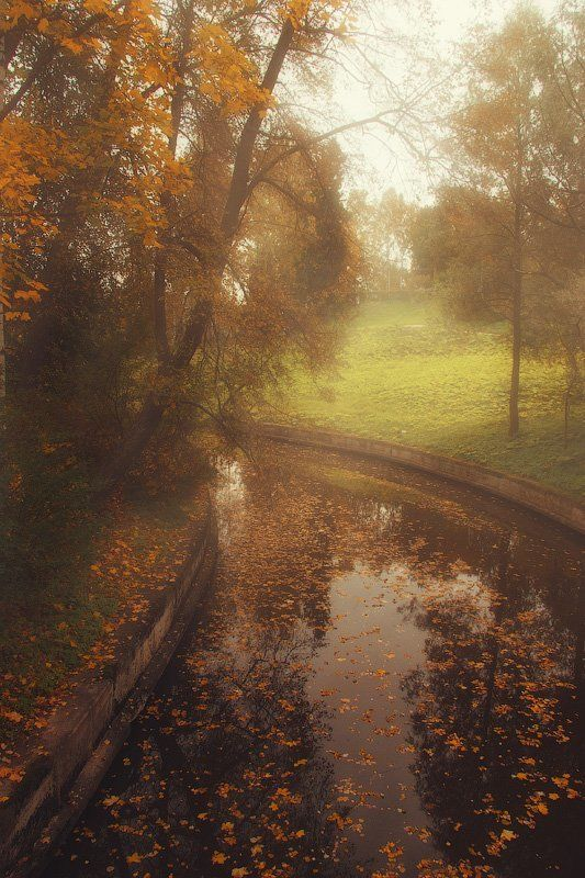 павловск, парк, осень, дерево,туман, вода, пруд, листва, Тихая водаphoto preview