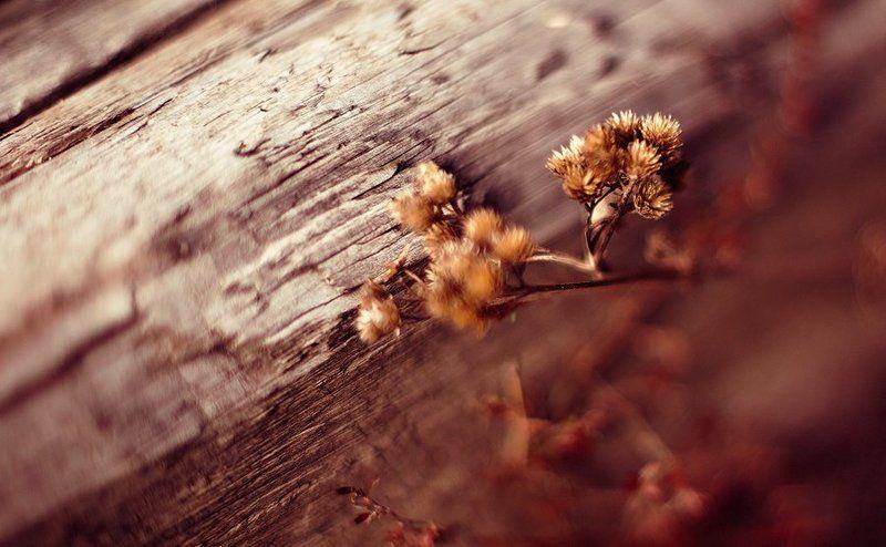 Запах древесиныphoto preview