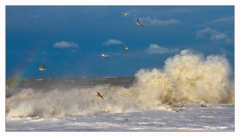 Черное море и чайкиphoto preview