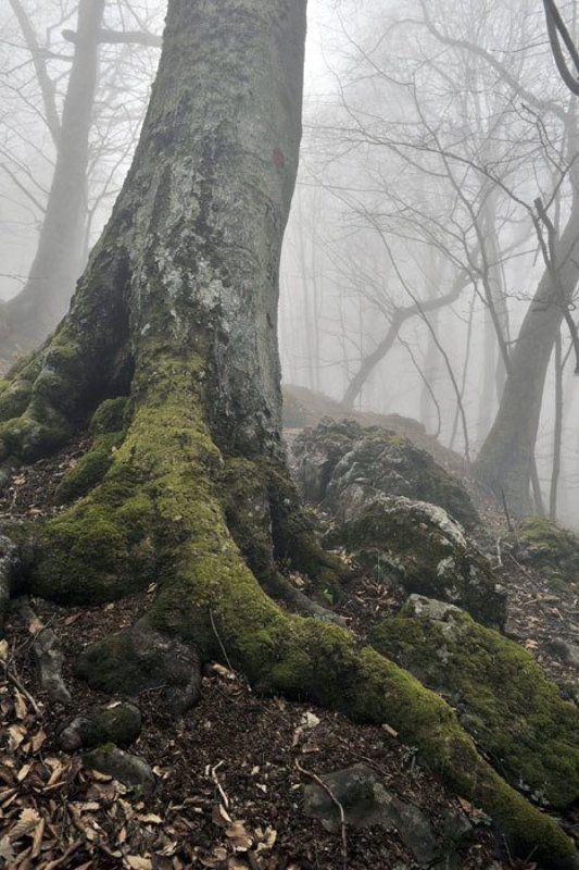 Туман в горном лесуphoto preview