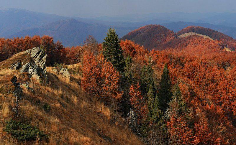 карпаты., осень. Осенние прогулки.photo preview