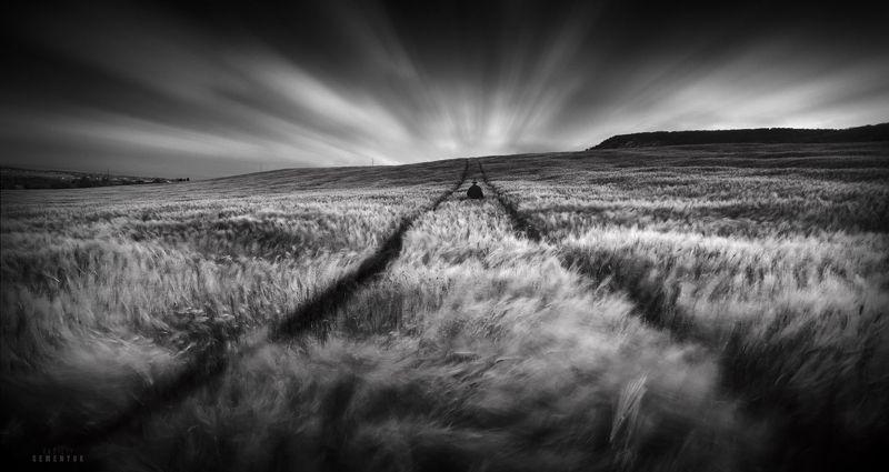 поле, человек, ветер, пшеница, крым, длинная выдержка, ветер, mood, man, wind blow, field, black and white. Уходя.photo preview