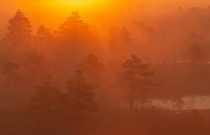 туман, рассвет, природа, пейзаж, лето, болото, свет, эстония Туманный рассвет на болотеphoto preview