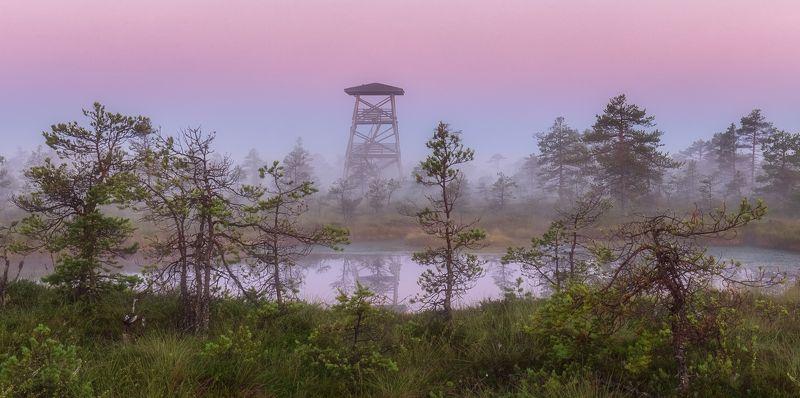 туман, природа, пейзаж, лето, болото, эстония За долами, за лесами, вдали от суеты..photo preview
