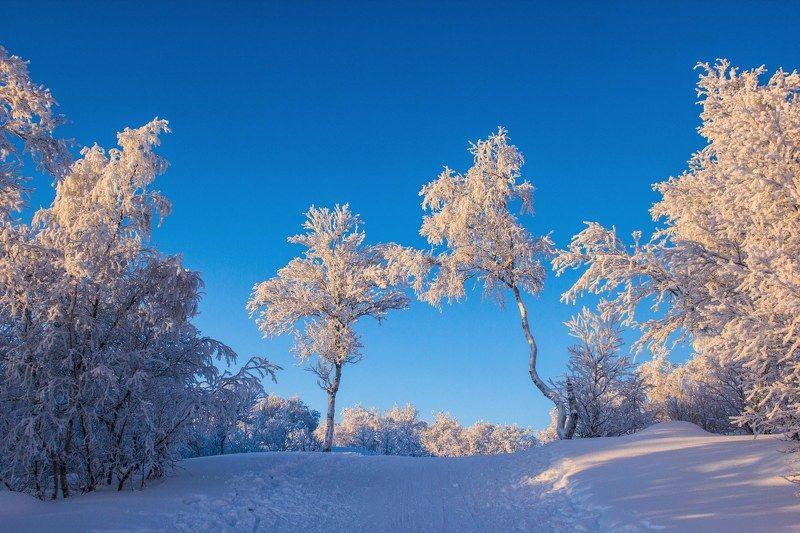 мороз, солнце, деревья, иней, снег, зима, пейзаж, тропа В оковах морозаphoto preview